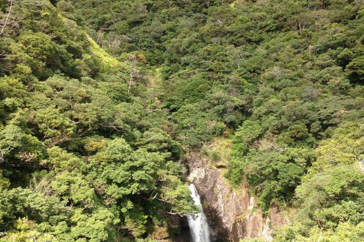 waterfall flows between two tree covered hills
