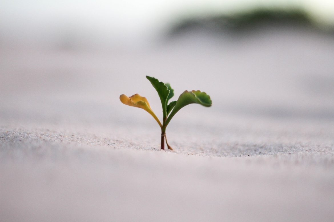Young plant growing out of sand.