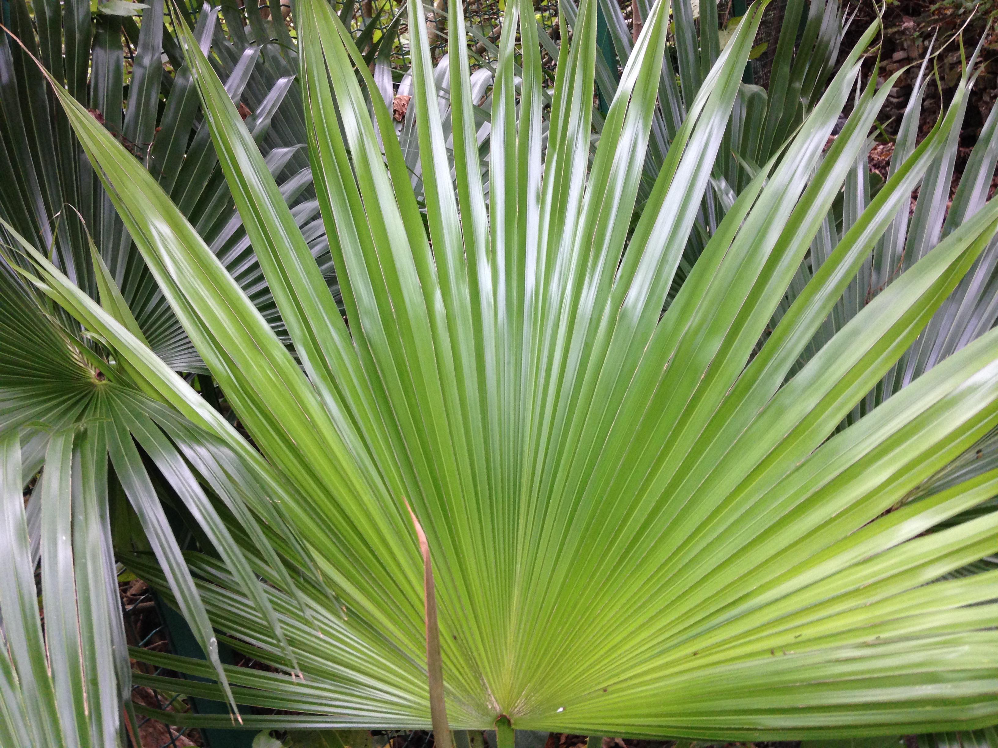 tropical palm leaf, making a semi-circle.